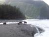 Horses in Waipi\'o
