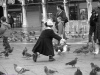Pigeons of San Marco